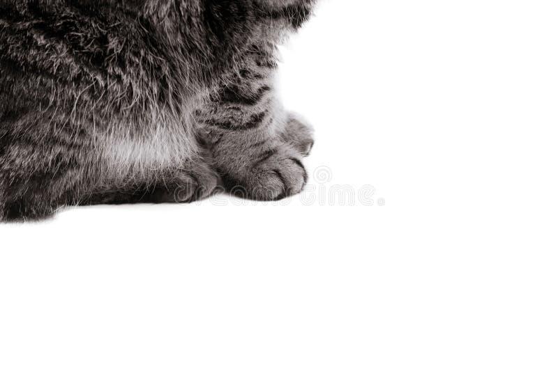 pattes de chat d'isolement sur le fond blanc images stock