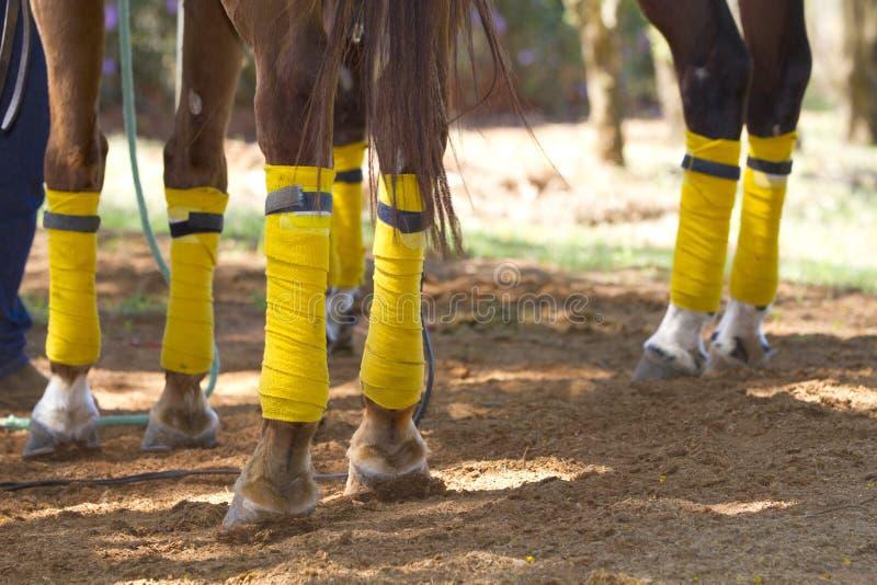 Pattes de cheval image stock