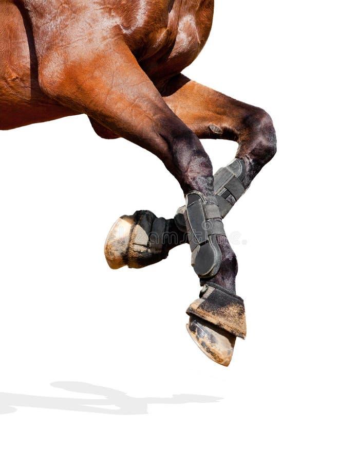 Pattes de cheval d'isolement photos stock