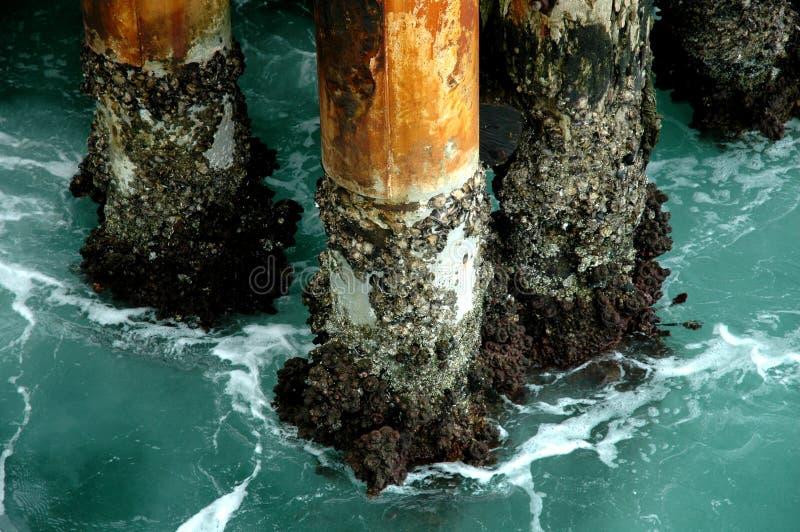 Pattes de mer photo stock