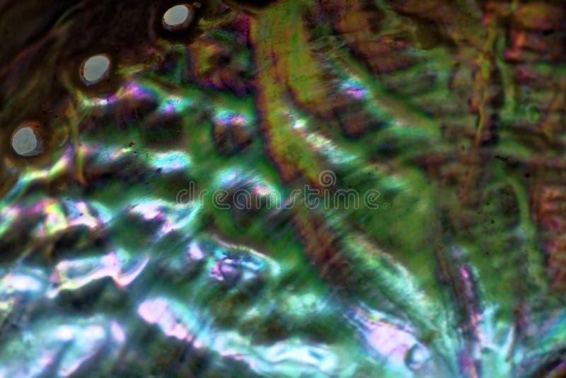 Paua skorupy kolorowa inside powierzchnia makro- zdjęcia stock