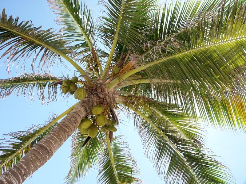 Download Paume photo stock. Image du été, durée, vacances, nature - 726022