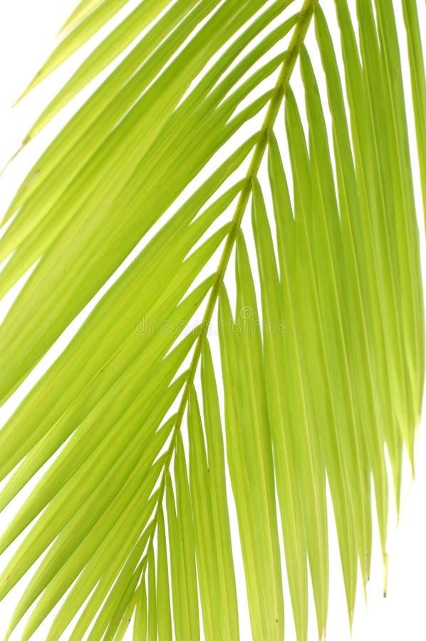Download Paume photo stock. Image du lueur, été, tropical, normal - 8671890