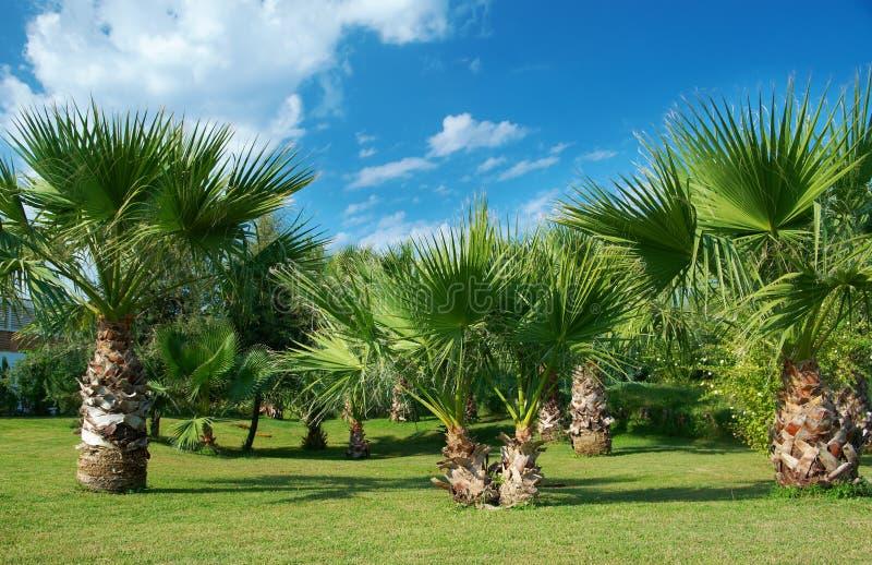 Paume-arbres de beauté à Antalya photos stock