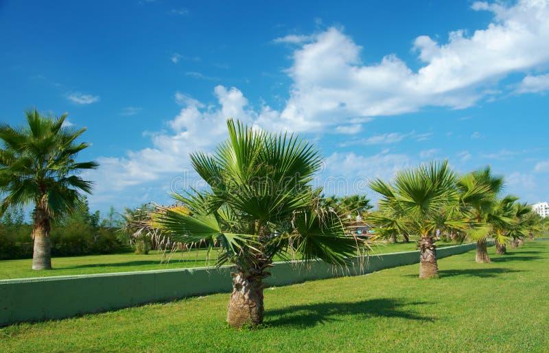 Paume-arbres de beauté à Antalya images stock