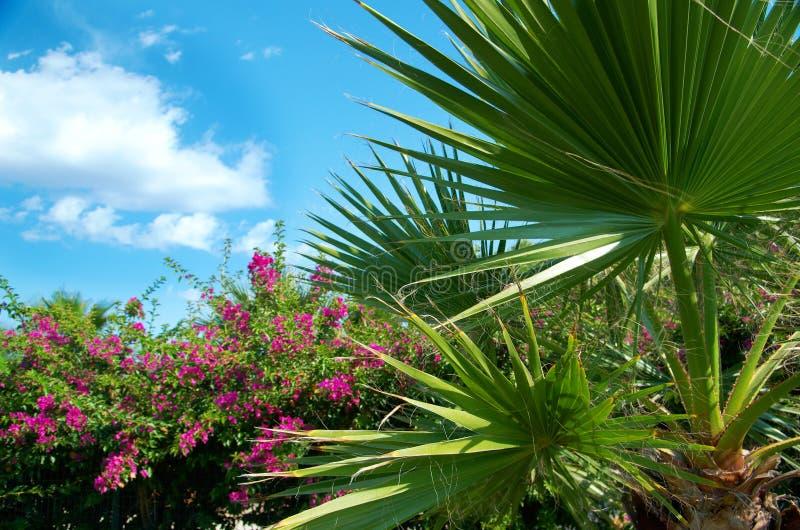 Paume-arbres de beauté à Antalya photo stock