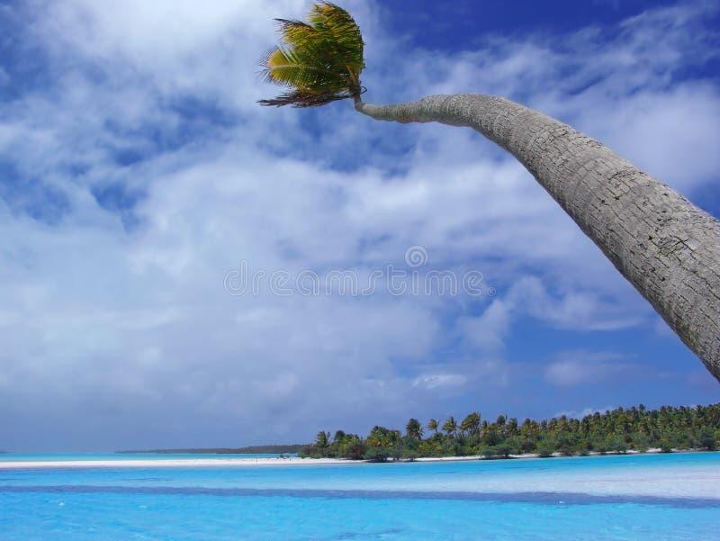 Paume d'Aitutaki photographie stock libre de droits