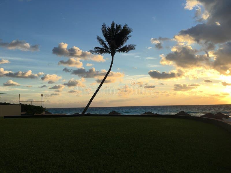 Paume de Cancun image stock