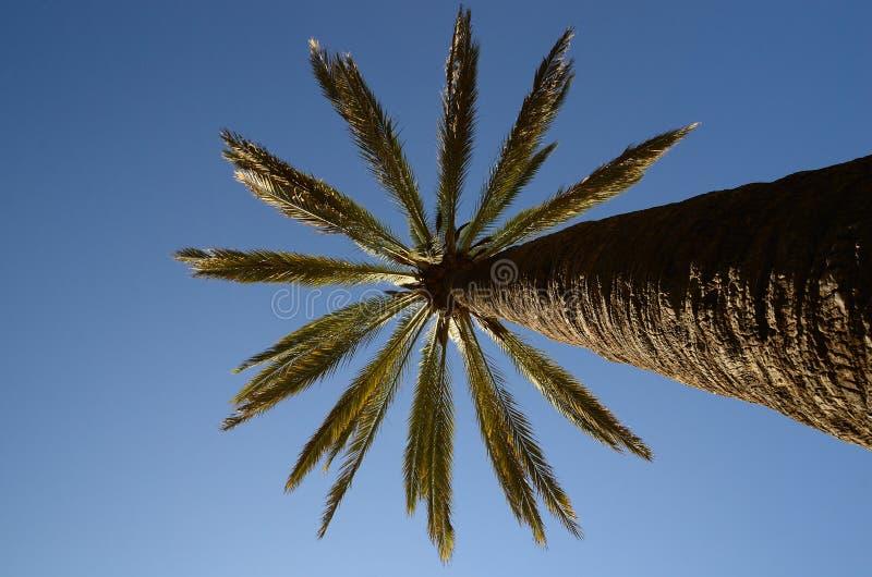Paume et ciel bleu à Barcelone image stock