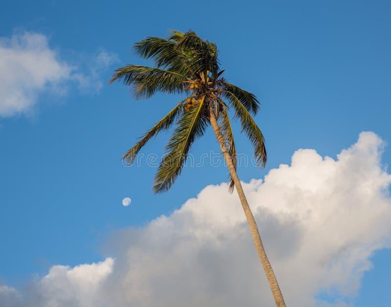 Paume et lune photographie stock libre de droits