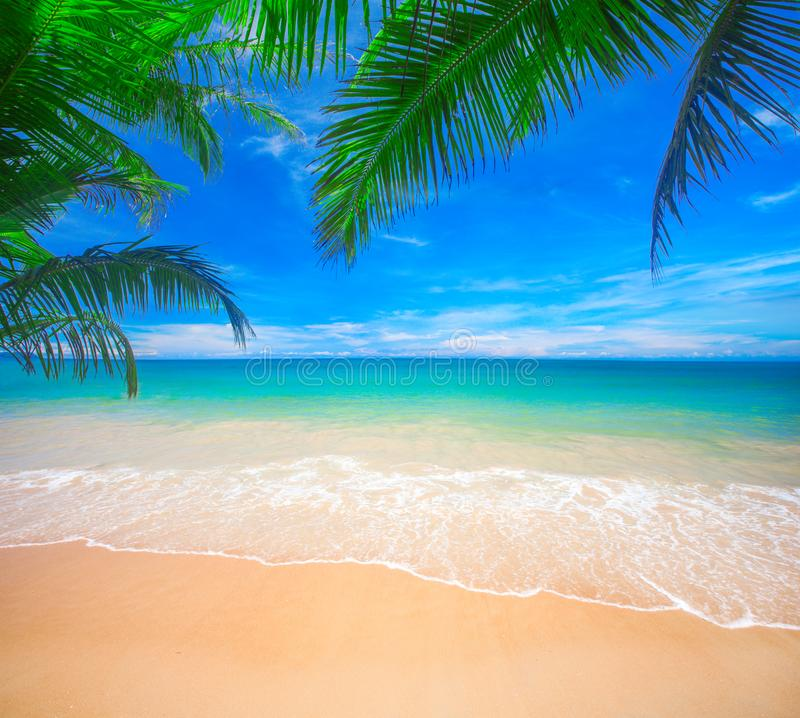 Paume et plage tropicale photo stock
