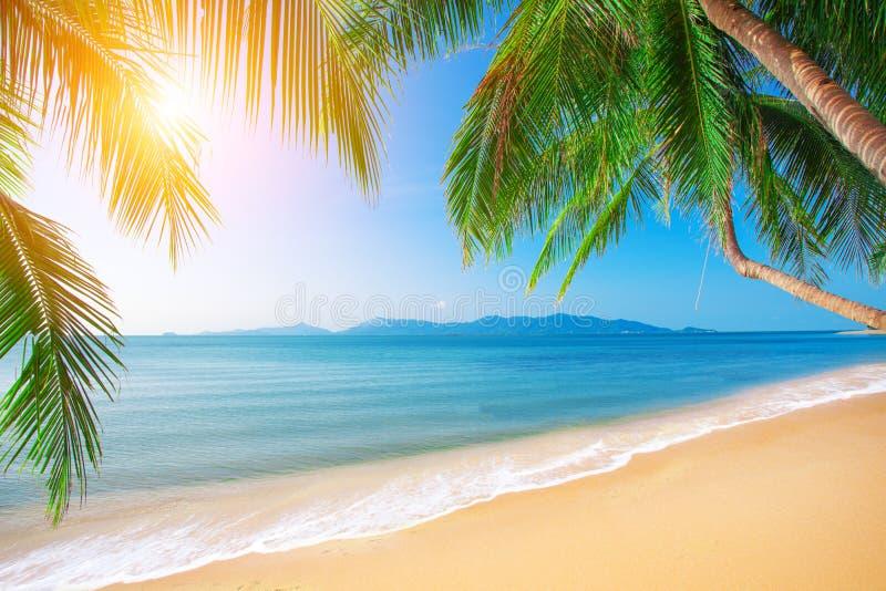 Paume et plage tropicale photo libre de droits