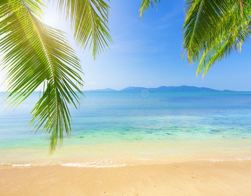 Paume et plage tropicale image libre de droits