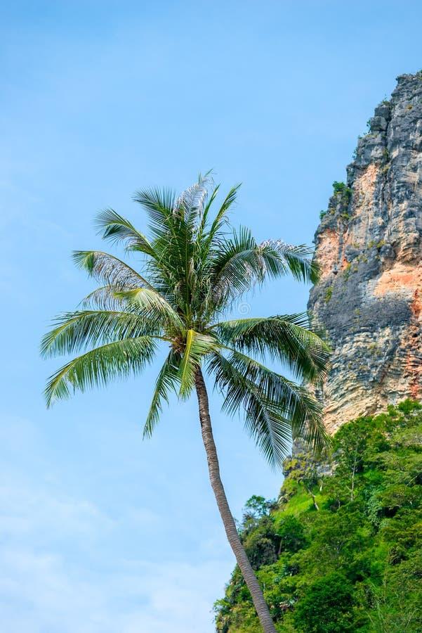 Paume et roche contre le ciel bleu image libre de droits