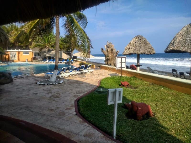 Paume, huttes d'arbres mini, herbe, l'océan et la piscine images libres de droits