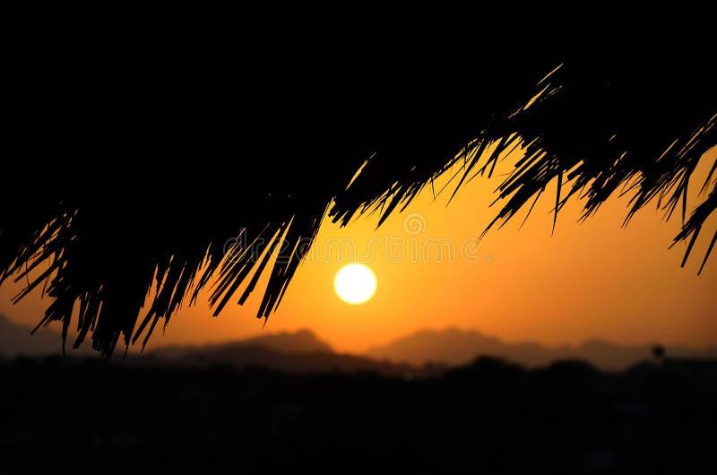 Paume noire et coucher du soleil photo stock