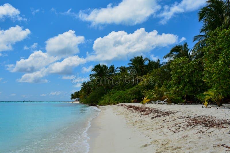 paume, océan, arbres, cabriolet, Indien, l'eau, vacances, tropicales, plage, sable, île, îles, Maldives, nature, été, ciel, holid images stock