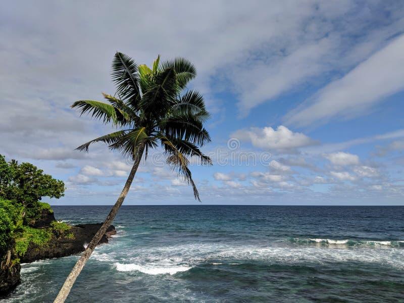 Paume sur la plage au Samoa photographie stock