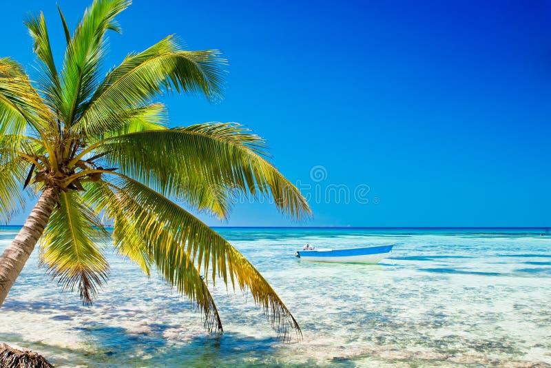 Paume sur la plage blanche de sable près de l'océan cyan photos stock