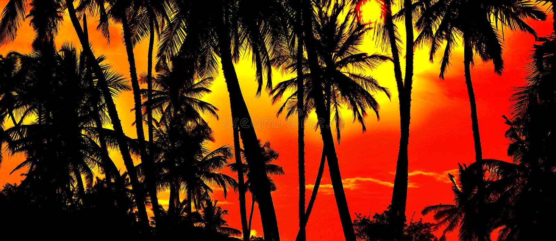 Paume sur le coucher du soleil photographie stock libre de droits
