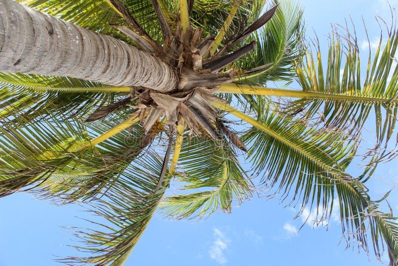 Paume sur un ciel clair bleu images stock