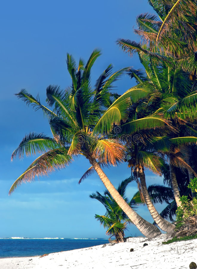 Paume tropicale images stock