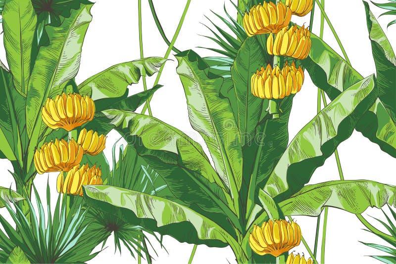 Paume tropicale de bananes de vecteur, mod?le sans couture de texture illustration stock