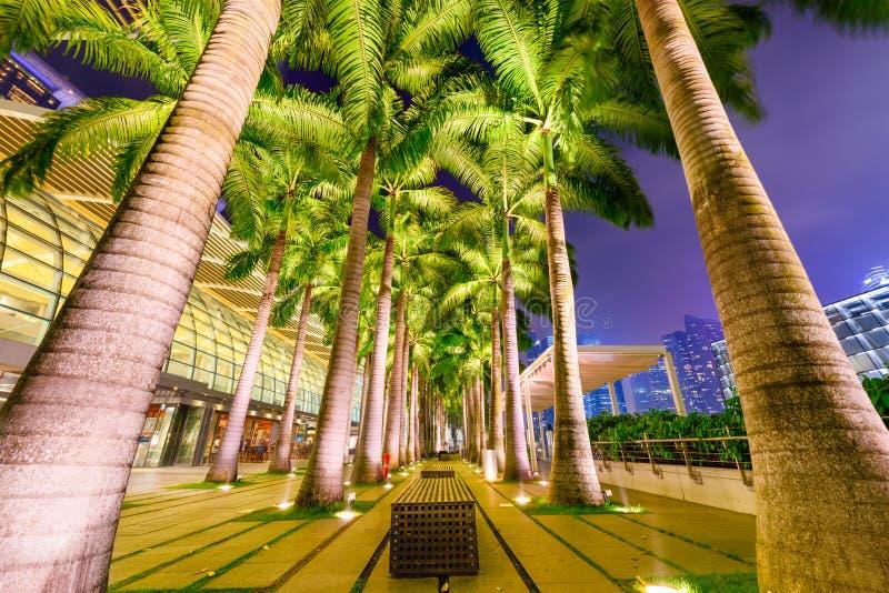 Paumes à Singapour image stock