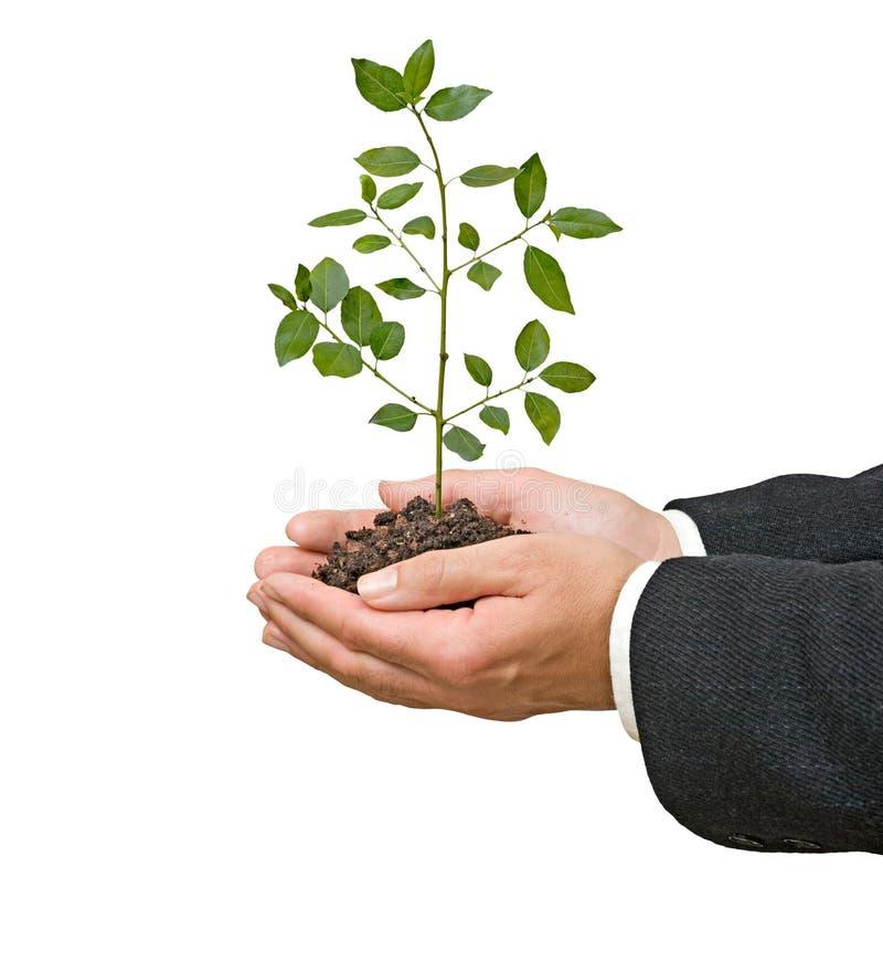 Paumes avec la plante d'arbre images stock