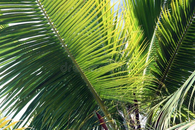 Download Paumes dans la brise image stock. Image du tropical, mystérieux - 2139425