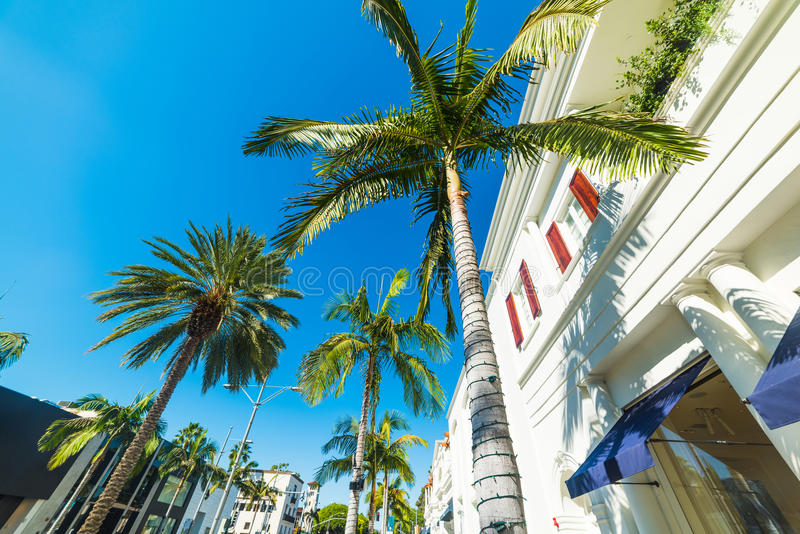 Paumes dans Rodeo Drive images stock