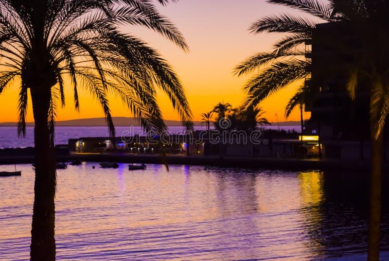 Paumes de coucher du soleil photo stock