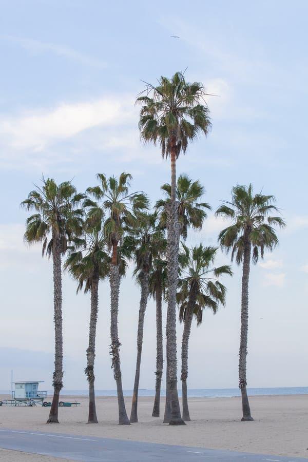 Paumes de fan de la Californie sur une plage paisible photos libres de droits