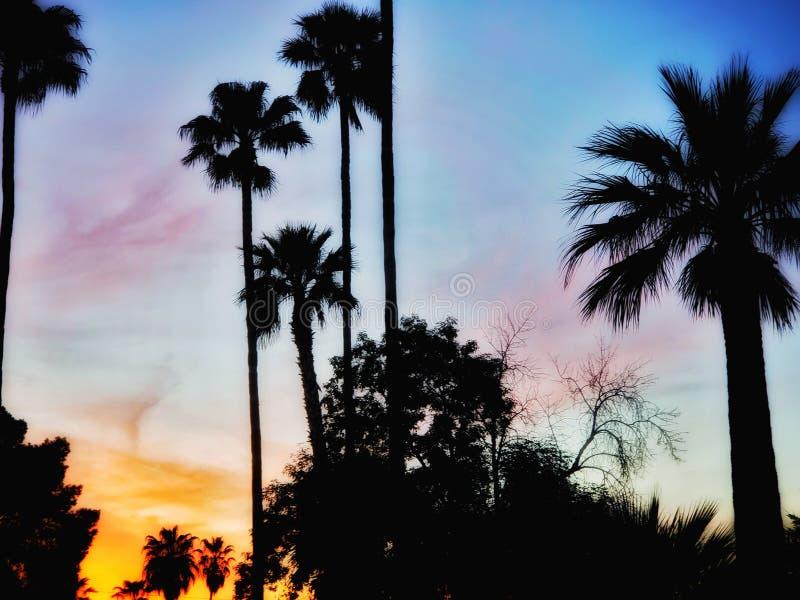Paumes de l'Arizona photos libres de droits