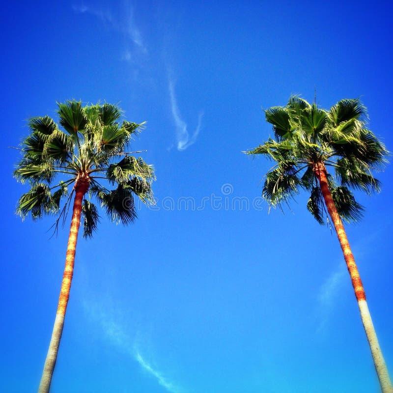 Paumes de La Jolla photographie stock libre de droits