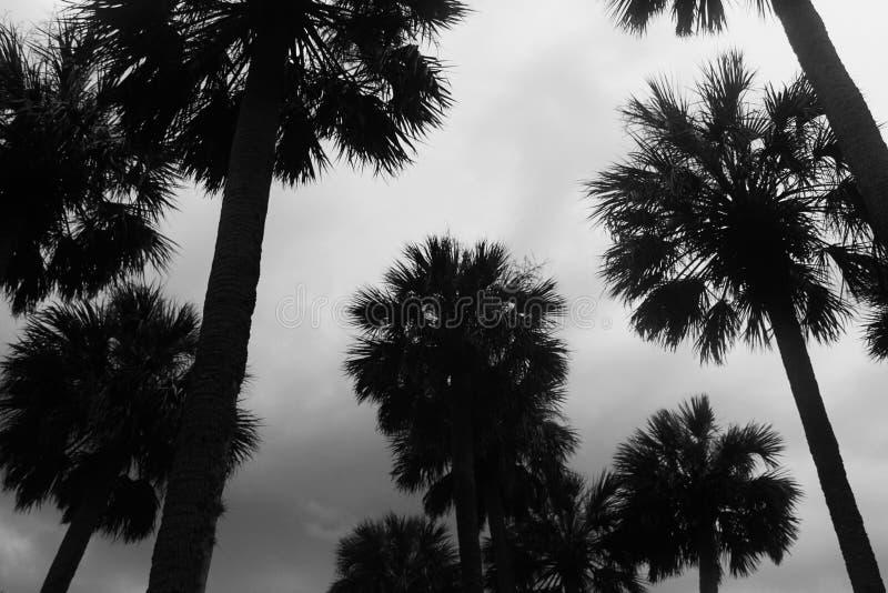 Paumes de Rainny images stock