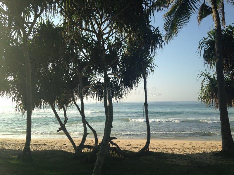 Paumes de Sri Lanka photo stock