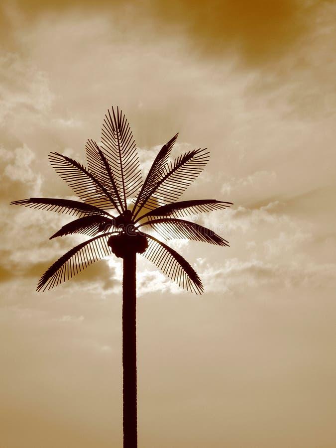 Paumes de Sun photographie stock libre de droits