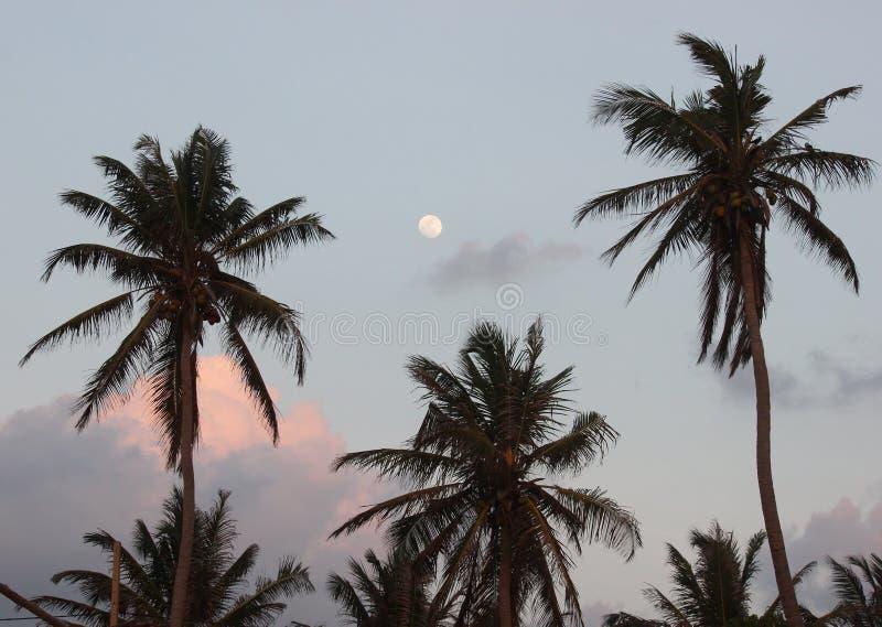 Paumes et lune sur le ciel avec le coucher du soleil de nuages image stock