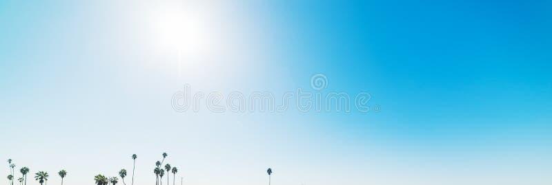 Paumes sous un soleil brillant image stock