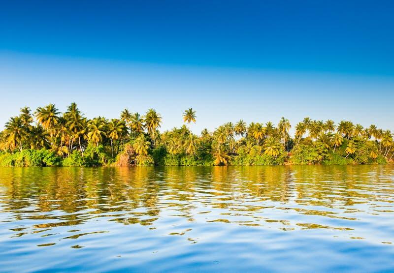 Paumes, Sri Lanka image stock