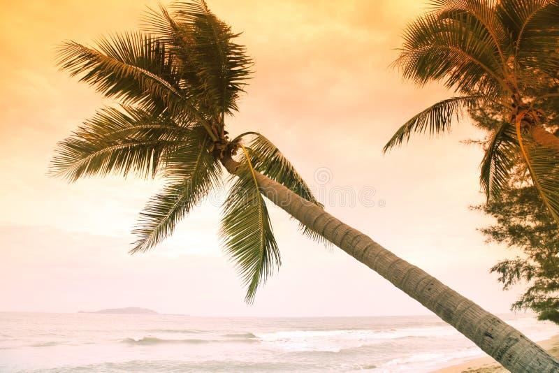 Paumes sur l'île tropicale images stock