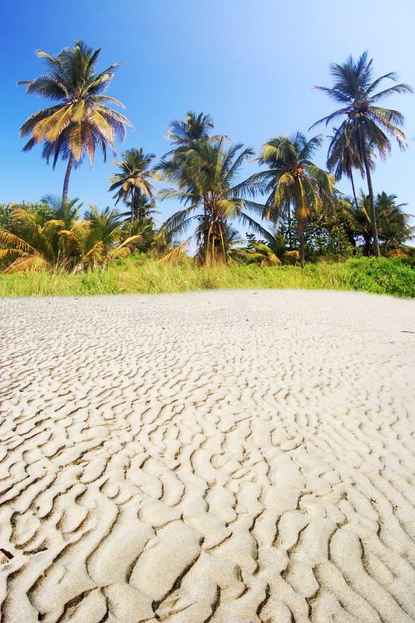 Paumes sur la plage photos libres de droits