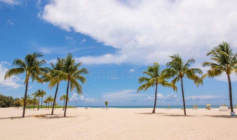 Paumes sur la plage photographie stock
