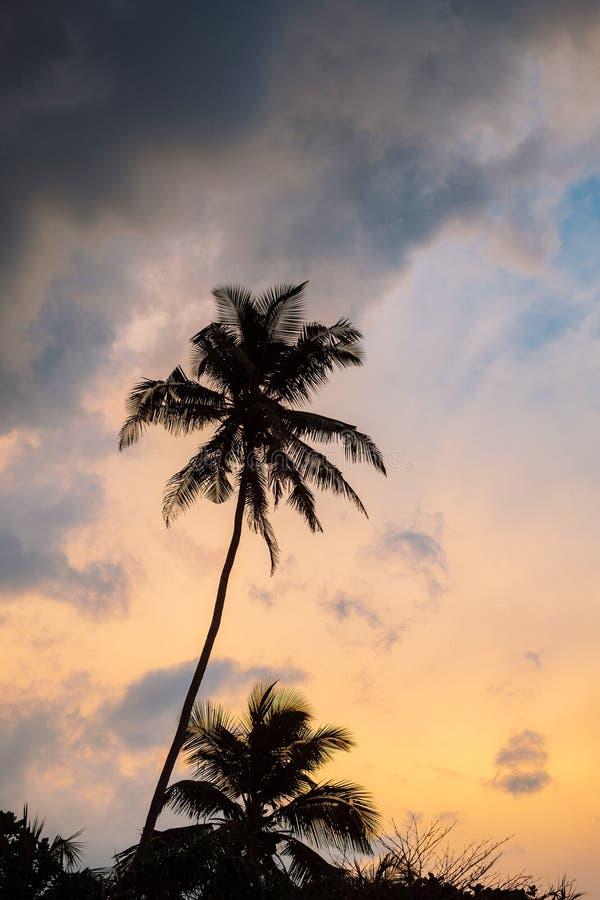 Paumes sur le coucher du soleil photos stock