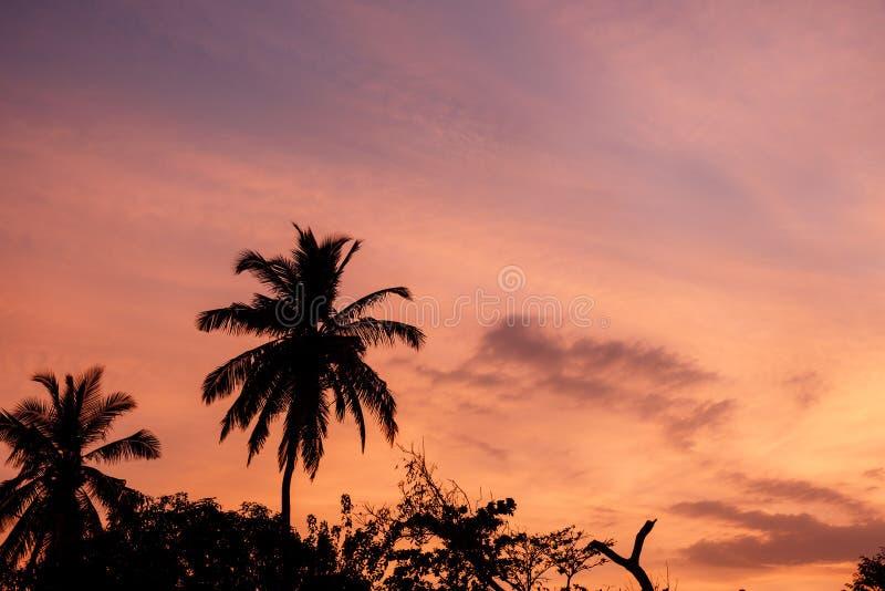 Paumes sur le coucher du soleil images libres de droits