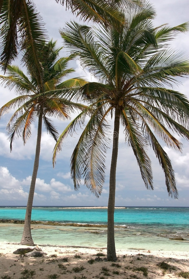 Paumes tropicales photos stock