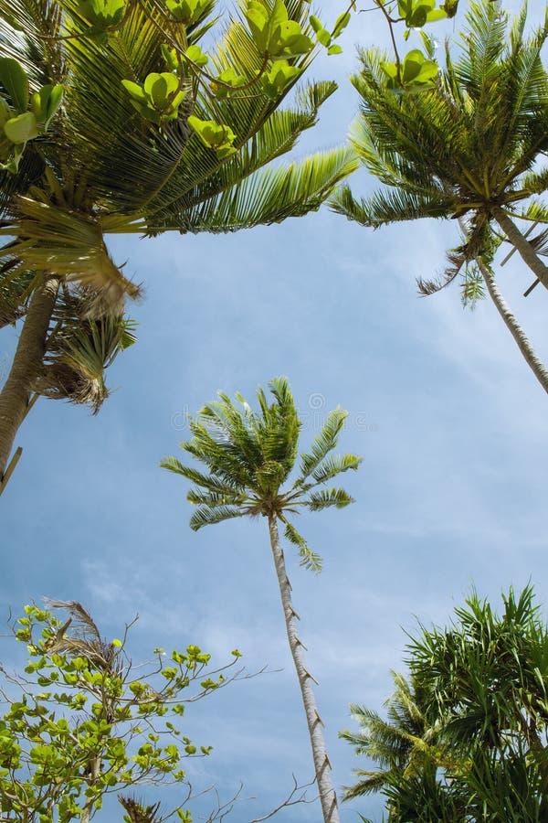Paumes tropicales intéressantes sur le ciel bleu de retour photos libres de droits