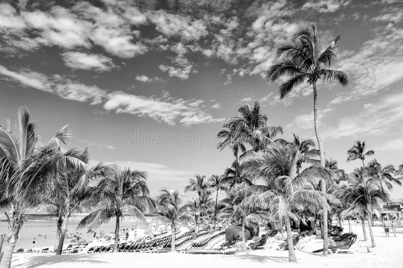 Paumes vertes sur la plage blanche de sable image stock