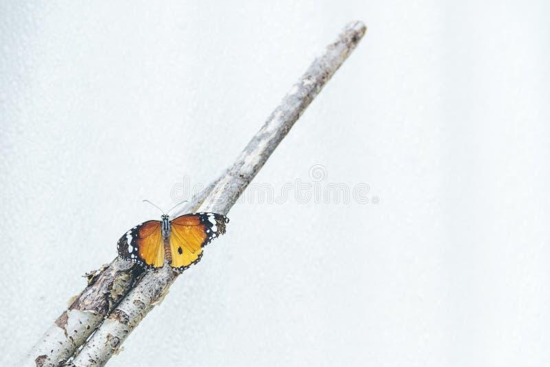 Pausas de la mariposa imagenes de archivo